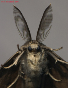 rsz_900_moth.jpg