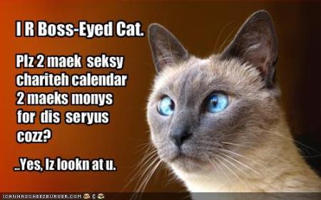 boss-eyed-cat